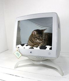 """Upcycled Apple Computer Pet Bed"" - How freaking smart is this?"