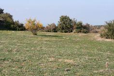 http://ayancuk.com/koy-6521-Kocakoy-Koyu-Ayvacik-Canakkale.html  Kocaköy Köyü; Çanakkale ilinin Ayvacık ilçesine bağlı bir köydür.