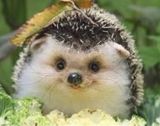 Happy Hedgehog :D