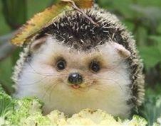 Happy Hedgehog :D