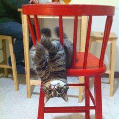 Too funny Cat!!