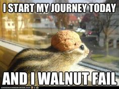 I WALNUT FAIL