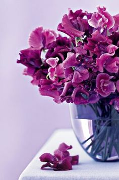 Photos of flowers - Floral design in fashion and decor - nb-nov05-wallpaper.jpg