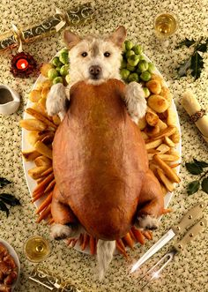 This Photographer Transforms His Dog Into Different Animals Every Holiday Season Published on December 19, 2014 by Michael Zhang