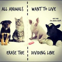 there's no difference when it comes to wanting to live & love <3 #MyVeganJournal