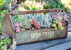Why tote a bunch of scratchy, rusty pliers, hammers, and wrenches around in this when you can use it instead to house some ah-mazing succulents? Like Crassula rupestris (large form), Echeveria setosa v. ciliata, Graptosedum 'Vera Higgins', Kalanchoe tomentosa 'Panda', Portulacaria afra, and Graptoveria 'Blue Pearl'.