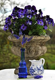 """En ce début printanier, fières sur leurs hautes tiges.... """"In early spring, proud of their tall stems, the grape hyacinths waddle to the wind, by mixing the bold hue of their bells to thoughts of pansies."""" <-Or something like that? swoon    les muscaris se dandinentau vent ,    en mêlant lateinte audacieuse de ses clochettes à celle des pensées ..."""