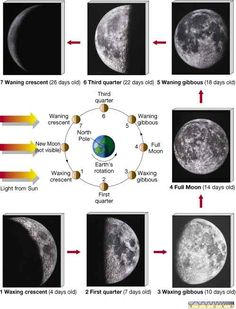 Lunar phases...this is probably the thing that stuck with  me the most from science class! the one thing i remember and use