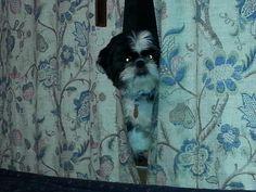 5-7-15  Peek-A-Boo Toby!