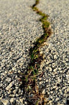 Depth of Field: A Narrow Path
