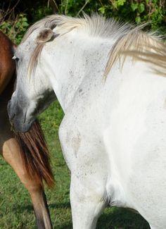 wild eyed horse google search horses pinterest
