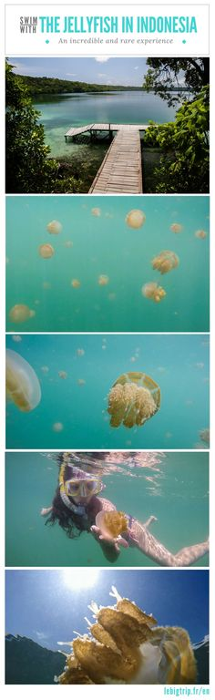fr/species-stingless-jellyfish-kakaban/[VIDEO] Swim with the jellyfish of Kakaban. an incredible experience Amazing Destinations, Travel Destinations, Travel Tips, Travel Ideas, Jellyfish Species, Beach Trip, Beach Travel, Underwater World, Island Beach