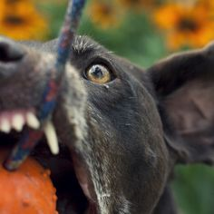 Cease the moment! Panther, Goats, In This Moment, Dog, Animals, Diy Dog, Animales, Animaux, Panthers