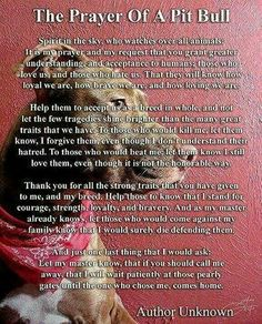 Pitbull prayer