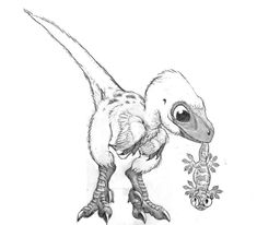 It's my velociraptor as a baby! __ Sketch for baby velociraptor by Psithyrus Dinosaur Drawing, Dinosaur Art, Dinosaur Sketch, Cute Dinosaur, Prehistoric Creatures, Mythical Creatures, Animal Drawings, Art Drawings, Dinosaur Tattoos