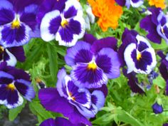 PT NAMPA IDAHO. FLOWERS. MAY 15