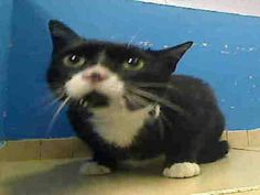 Manhattan NY.  Miffy.  Female.  3 yrs.  Dies in a.m.  See Pets on Death Row- Urgent Death on fb.***RESCUED***