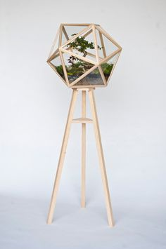 Love this geometric terrarium...