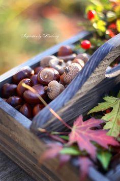 Blueberry: Autumn Box