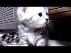 Meowing Cute Kittens And Talking Cat | New Funny Cats Compilation HD - YouTube. The purring!<3