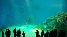The new Danish National Aquarium - impressive!