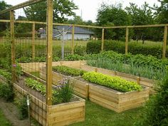 48 Most Popular Kitchen Garden Design Ideas & Garden trellis designs Building A Raised Garden, Raised Garden Beds, Raised Beds, Herb Garden Design, Garden Tips, Vegetable Garden Design, Veg Garden, Garden Trellis, Garden Boxes
