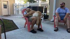 Dog loves his human