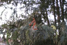F 1, Art Blog, Wordpress, Christmas Ornaments, Holiday Decor, Plants, Prime Lens, Christmas Jewelry, Plant