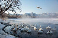 http://deniseippolito.com/wp-content/uploads/2014/02/65C5849Hokkaido-Japan.jpg