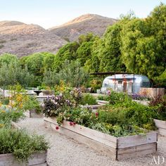 Flowers, herbs, and vegetables flourish in Patrick Dempsey's Malibu garden's raised beds, which are constructed from reclaimed scaffolding.