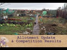 Purple Sweet Pea Allotment Update and Competition Results Episode 68