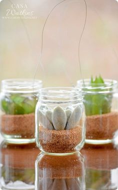 Mini Succulent Hanging Planters Mini Succulent Hanging Jars ~ Repurpose old baby food jars into stylish DIY home decor with this simple five-minute craft! Succulent Hanging Planter, Succulent Pots, Succulents Diy, Hanging Planters, Colorful Succulents, Growing Succulents, Plant Pots, Diy Planters, Baby Jars