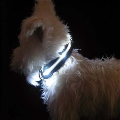 LED Lighted Dog Collar.... try to hide from us in the woods with this on Lex!!!!!!