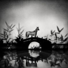 AWATING THE WIND, Huang Xiaoliang - 2012