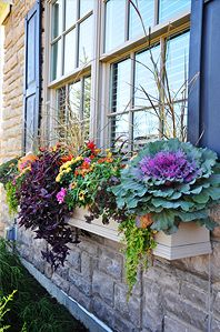 Fall Flowers...love this window box (using purple in a fall arrangement)