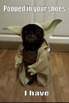 May the Bark Be With You (star wars,yoda,cute,dog,funny)