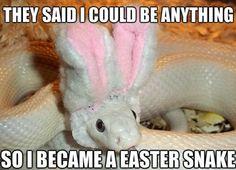 Easter Snake - www.meme-lol.com