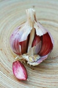Growing fall garlic