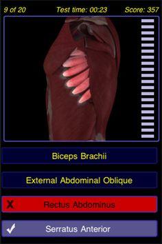 Musculoskeletal System #Musculoskeletal #System #Apple #iOS #Apps