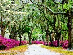 On this tour, bike from Charleston to Savannah.  Soak up authentic charm and natural beauty in the coastal South.  #AdventureTravel