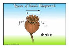 Types of seed dispersal posters