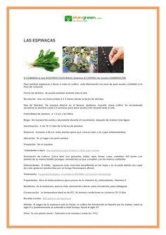 Las espinacas, una verdura con muchas posibilidades