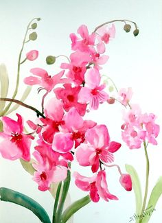 Pink Orchids, original large watercolor painting 15 X 20