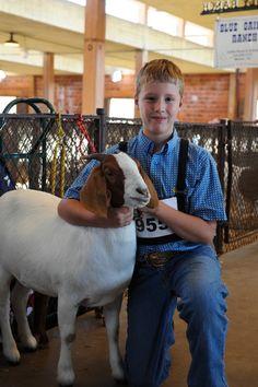 Livestock Show- State Fair of Texas 2011