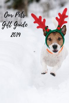 A wonderful list that includes items from food to scarves! #petgiftguide #petownersgiftguide #petgifts