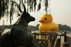 RUBBER DUCK @ 北京颐和园 Beijing China