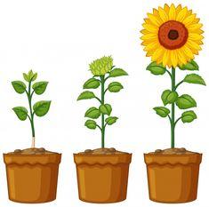 Three pots of sunflower plants Free Vector Borboleta Diy, Guitar Clipart, Monster Clipart, 257, Plant Vector, Sunflower Wallpaper, Clipart Black And White, Vector Photo, Halloween Parties