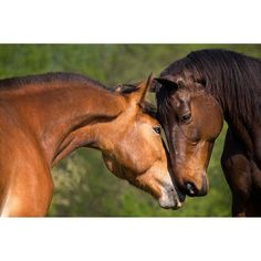 Use discount voucher code PIN49 and get this Equine Psychology Diploma Course for just £49.00 (Usually £249.00)