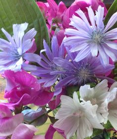 Roadside flowers, Inverhuron, Ontario