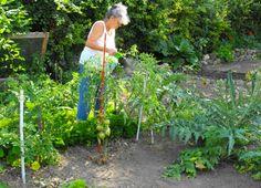 Comment prévenir le mildiou des tomates ? Conseils pour éviter cette maladie au potager.